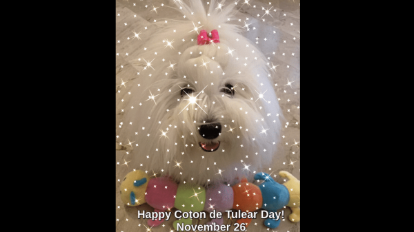 Coton de Tulear Day